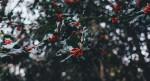Little Black Dress: Holiday Edition